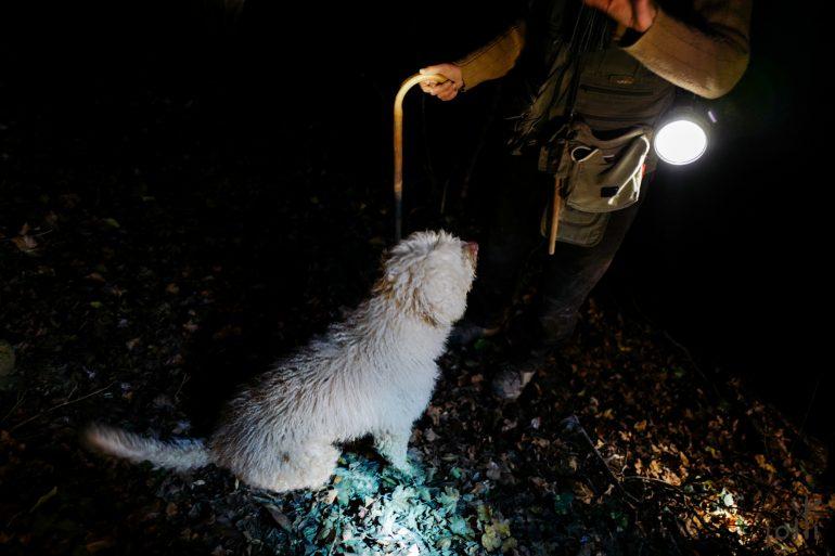 松露猎犬Luna,一边找松露,一边听着主人Giuseppe的指令
