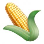14-ear-of-maize