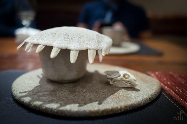 3歲的鱉甲殼及顱骨