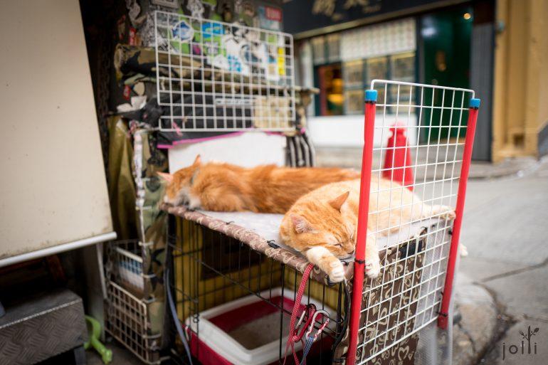 餐厅养了两只懒猫